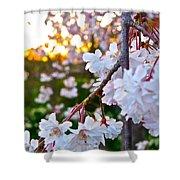 Einstein's Blossoms Shower Curtain