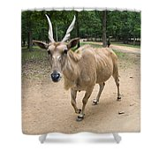 Eland Antelope Out In The Open Shower Curtain