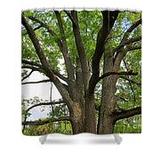 Elder Oak Shower Curtain