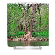 Elder Tree Shower Curtain