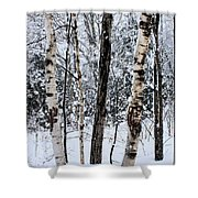 Elders In A High Country Grove Shower Curtain