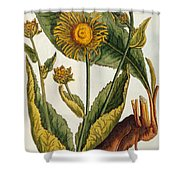 Elecampane Shower Curtain by Elizabeth Blackwell