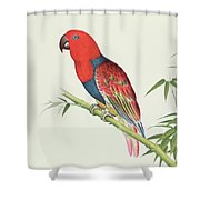 Electus Parrot On A Bamboo Shoot Shower Curtain