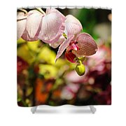 Elegance At The Market Shower Curtain