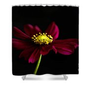 Elegance Of A Cosmo Shower Curtain