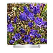 Elegant Brodiaea In Tilden Regional Park-california   Shower Curtain