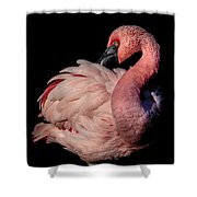 Elegant Shower Curtain