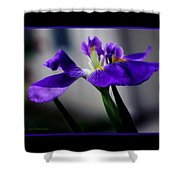 Elegant Iris With Black Border Shower Curtain