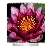 Elegant Lotus Water Lily Shower Curtain