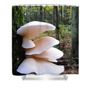 Elegant Oysters Shower Curtain