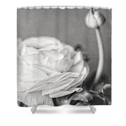 Elegant Ranunculus Flower In Black And White Shower Curtain