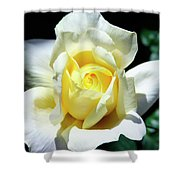 Elegant Rose Palm Springs Shower Curtain