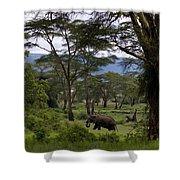 Elephant   #0068 Shower Curtain