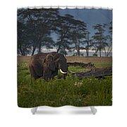 Elephant   #0134 Shower Curtain