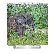 Elephant At Kruger Shower Curtain