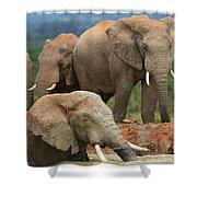 Elephant Bath Shower Curtain