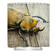 Elephant Beetle Shower Curtain by Aged Pixel