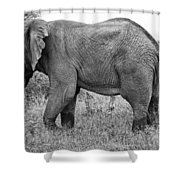 Elephant Bull In Black And White Shower Curtain