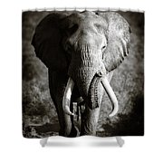 Elephant Bull Shower Curtain by Johan Swanepoel