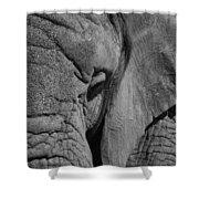 Elephant Bw Shower Curtain