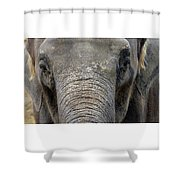 Elephant Close Up 1 Shower Curtain