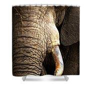 Elephant Close-up Portrait Shower Curtain by Johan Swanepoel