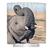Elephant Curling Trunk Shower Curtain