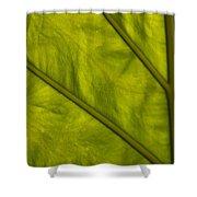 Elephant Ear   #4757 Shower Curtain