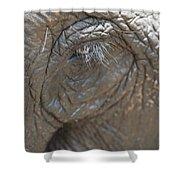 Elephant Eye Chiang Mai, Thailand Shower Curtain