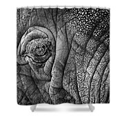 Elephant Eye Shower Curtain