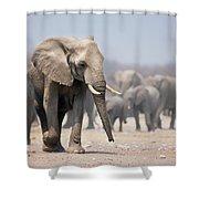 Elephant Feet Shower Curtain