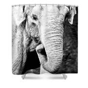 Elephant IIi Shower Curtain