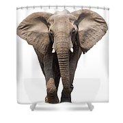Elephant Isolated Shower Curtain