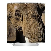 Elephant Portraint Shower Curtain