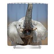 Elephant Portrait Shower Curtain