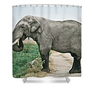 Elephant Roadblock Shower Curtain