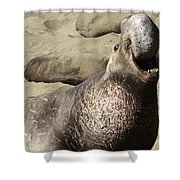 Elephant Seal Shower Curtain