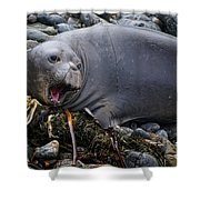 Elephant Seal Of Ano Nuevo State Reserve Shower Curtain