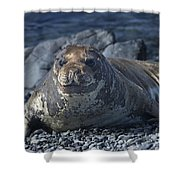 Elephant Seal Pup... Shower Curtain