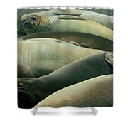 Elephant Seal Pups Shower Curtain