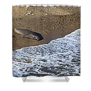 Elephant Seal Sunning On Beach Shower Curtain