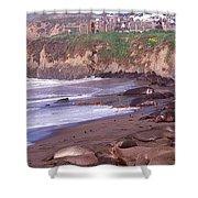 Elephant Seals On The Beach, San Luis Shower Curtain