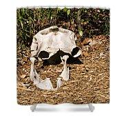 Elephant Skull Shower Curtain