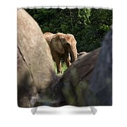 Elephant Spotted Between Rocks Shower Curtain