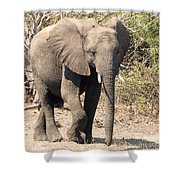 Elephant Stroll Shower Curtain