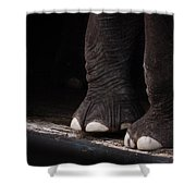 Elephant Toes Shower Curtain by Bob Orsillo