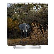Elephant Trail Shower Curtain