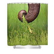 Elephant Trunk Pulling Grass Shower Curtain