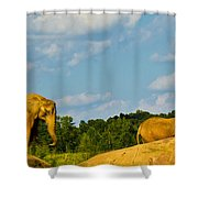Elephants Among The Rocks. Shower Curtain