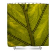 Elephant's Ear   #4754 Shower Curtain